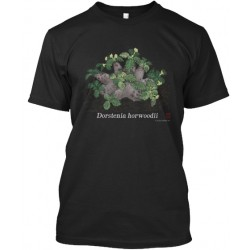 Be casual, get Dorstenia...