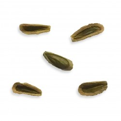 Cynanchum viminale ssp....